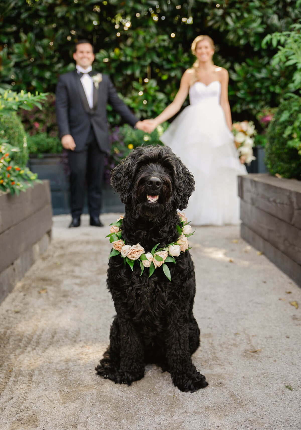 Best Dog and good boy in their humans Wedding